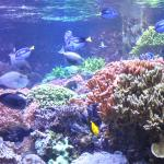 Tropical fish play among the coral and bottom dwelling creatures.