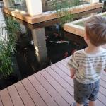My son loved spotting the fish and turtles in the pond every day