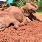 Two of the rescued orphans playing.