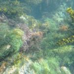 Snorkelling from Rhodes Hall shoreline.