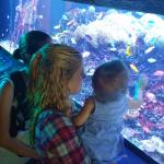Me my niece and sister looking at the salt water animal tanks.