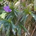 Orchids growing on a tree