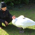 Swans use it too!