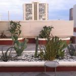 part of 5th floor patio cactus garden facing north