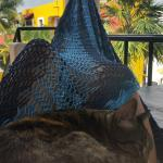 Resident kitty shared my hammock with me!