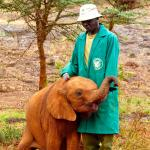 An orphaned baby elephant seeks comfort from a loving Keeper.