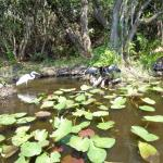 There are exotic birds who also share this habitat with the dangerous crocodiles