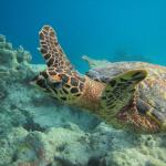 Can see turltes iniside the ocean, and the turtles can come really close to you! :)