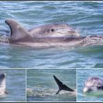 Bottle nose dolphins south padre