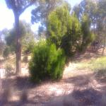 RACV Creswick: Beware of snakes, one was on the course during our stay [ February 2016 ]