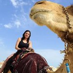 Desert Safari Doha | Inland Sea Tours