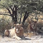 Savanna Safaris and Tours