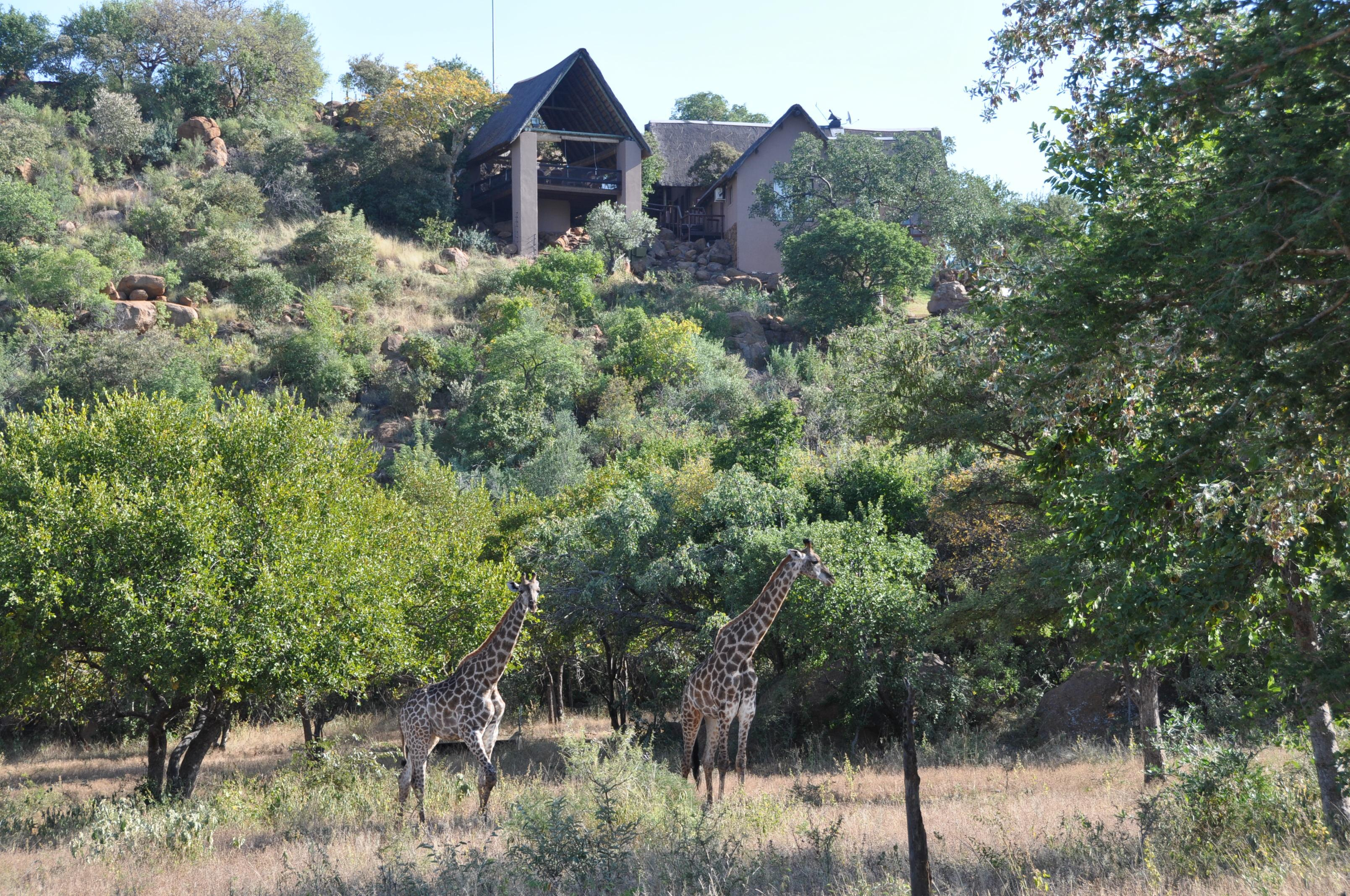 Game Lodge Rooiberg Thabazimbi, Bush Lodge Limpopo - Soul of Africa