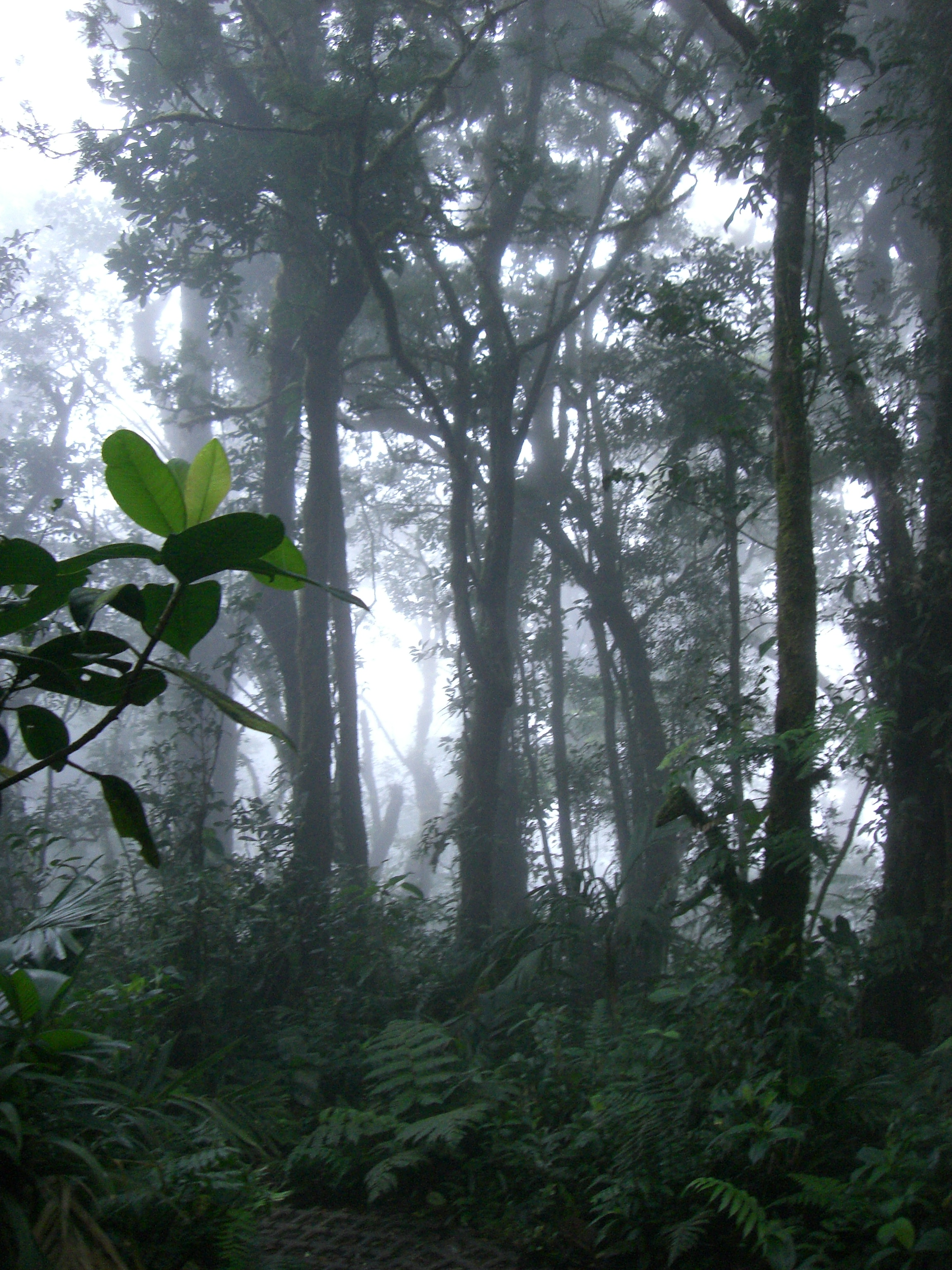 cloud coming in over the cloudforrest