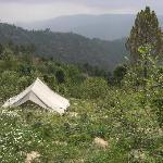 Camp Purple Mukteshwar