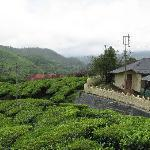 Photo of Zina Cottages Munnar