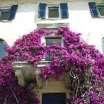 B & B La Bougainvillea