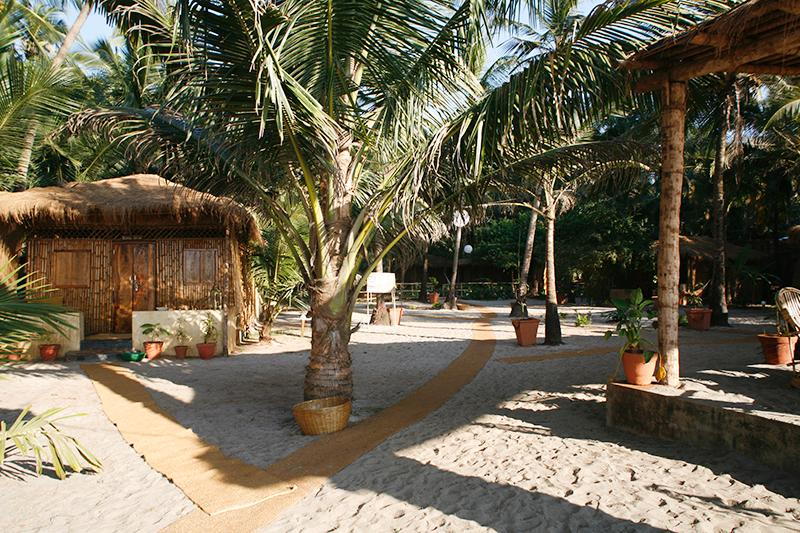Little Palm Grove