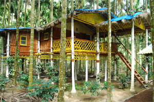 Comfort Homestay - Bee Hive