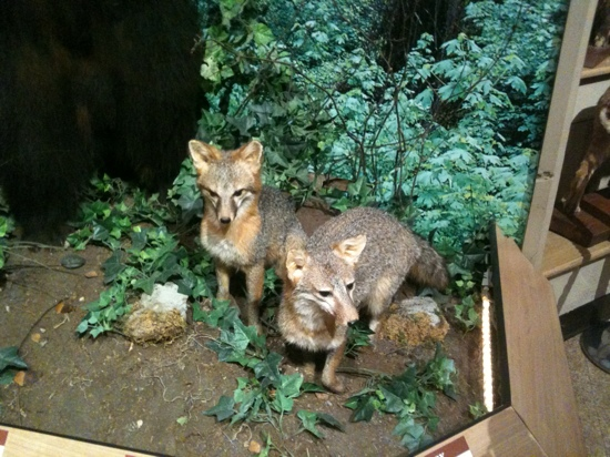 Brookshire's World of Wildlife Museum and Country Store