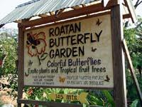 Butterfly Gardens