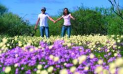 Perth's Best Wildflower Tour