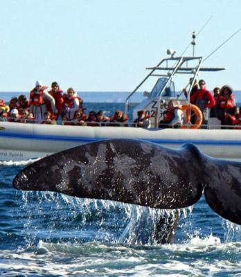 Southern Spirit Cruises (Whale watching)