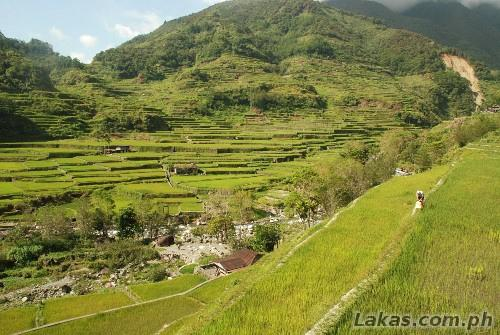 Bacung Spider Web Rice Terraces