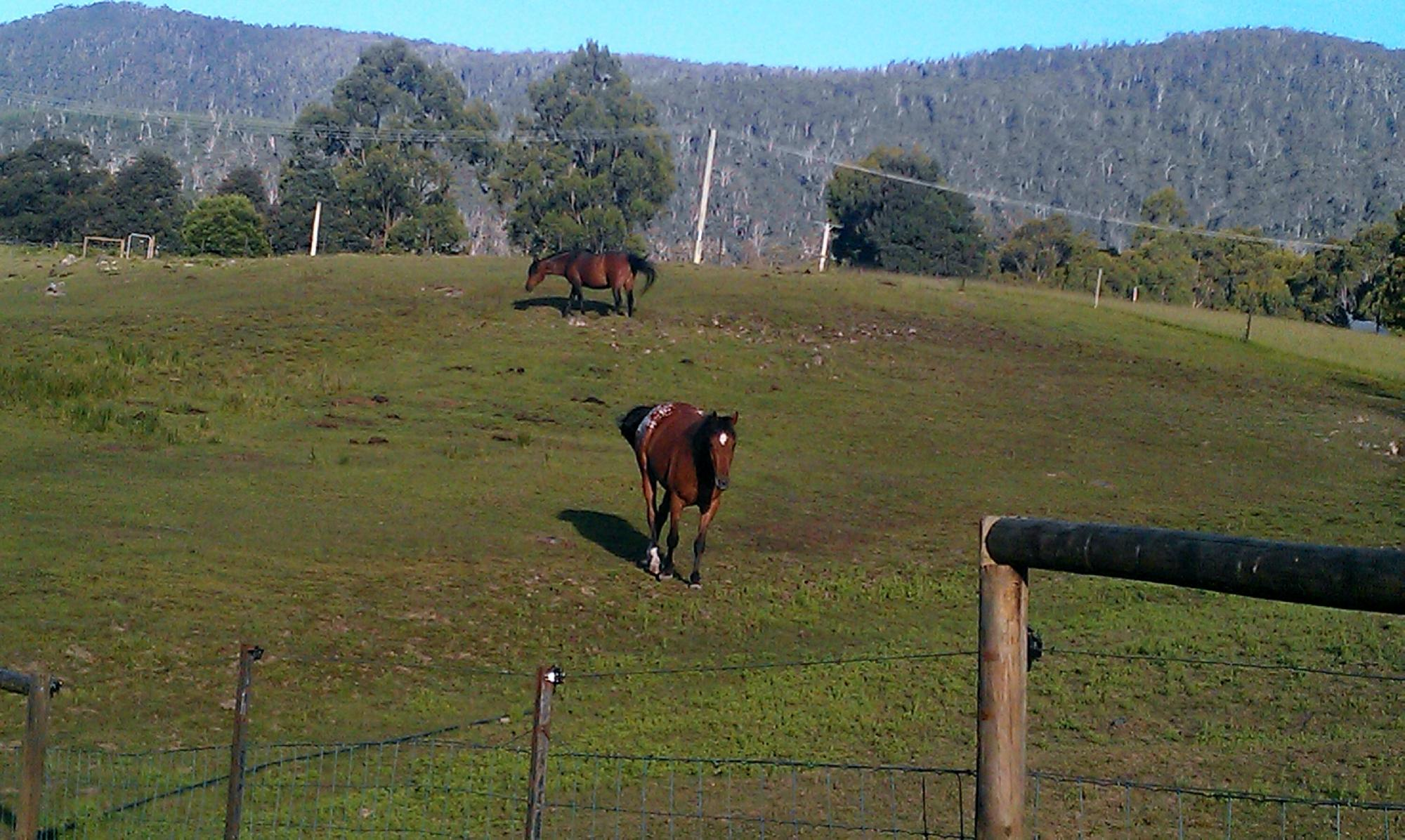 Horse-Haven Farmstay