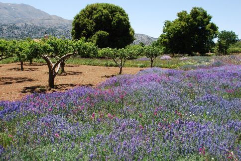 Flowers of Crete Day Trips