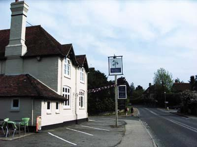 The Bluebell at Cocking