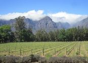 ‪Thelema Mountain Vineyards‬