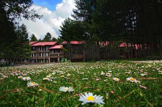Hotel Senator Pine-n-Peak Pahalgam