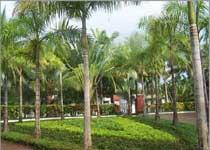 Hainan Tropical Crops Research Institute