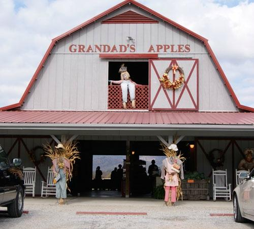 Grandad's Apples
