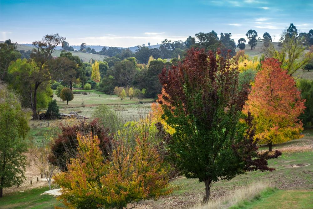 Balingup Australia  City pictures : Golden Valley Tree Park Balingup, Australia : Address, Phone Number ...