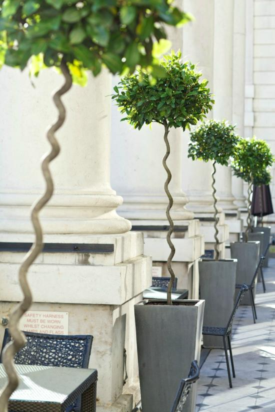 Terrace grill bar london mayfair restaurant reviews for The terrace bar and grill