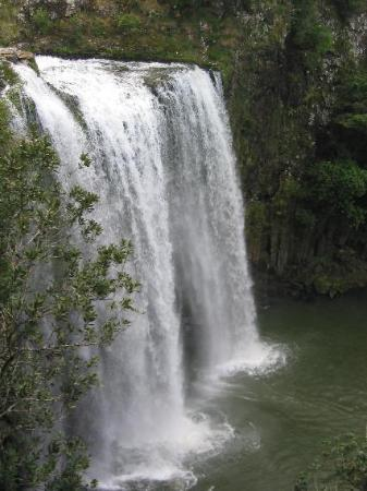 Whangarei Falls