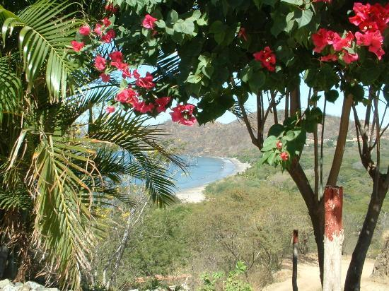 Playa Hermosa, Costa Rica : Lush Tropical Foliage at La Finisterra