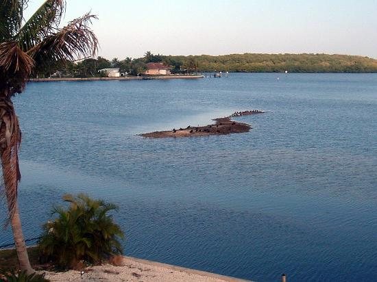 Cape Coral, Floride : A view from the shore 