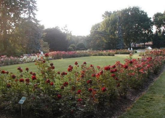 Welcome Sign Clearly Says Rose Garden Picture Of