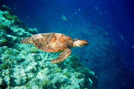 Great Barrier Reef, Australië: I took this at one of the first dive sites while snorkeling.