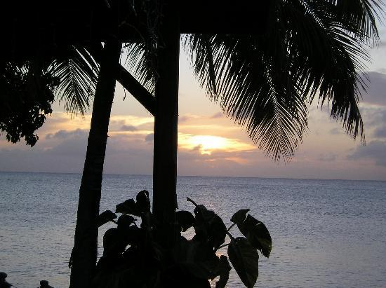 The Palms at Pelican Cove: Sunset
