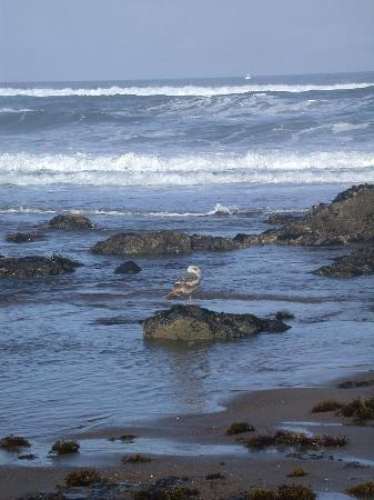 Lincoln City, Oregón: Early Morning Walk on the Beach