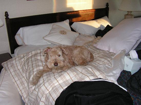 Four Points by Sheraton Denver Southeast: Pets stay for FREE!