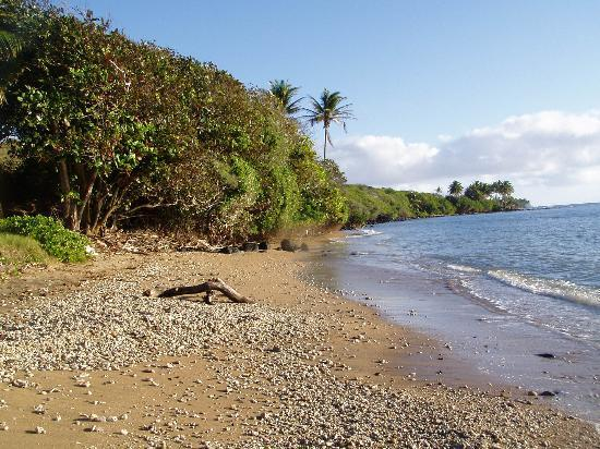 Kaunakakai, : The beach right in front of the cottage
