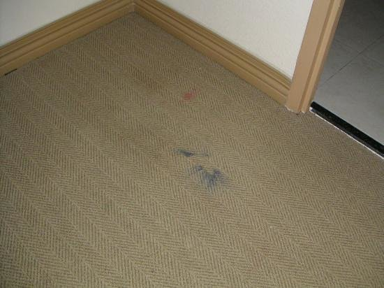 Clarion Hotel Birmingham: stained carpet spot #2