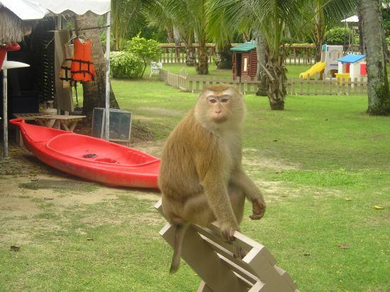 Cape Panwa Hotel: Another monkey