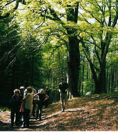 Aberystwyth, UK: On a guided walk at the Hafod Estate