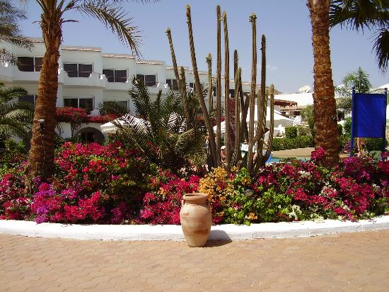 Iberotel Palace: The pretty gardens at hotel